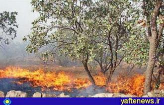 150 هکتار از جنگلهاي لرستان در آتش سوخت